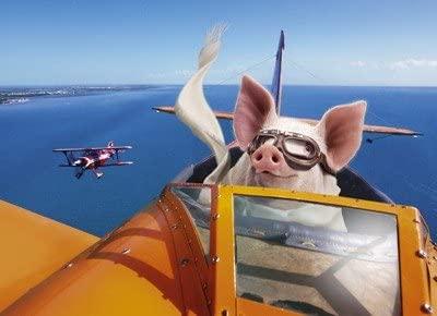 pig plane.jpg